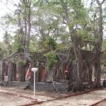 Ross_Island_Andaman_4140021